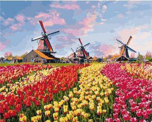 Красочные тюльпаны Голландии без коробки
