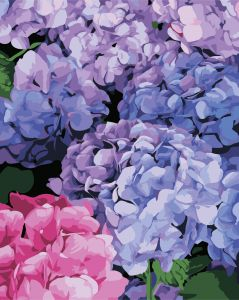 Цветущая гортензия - Картина-раскраска