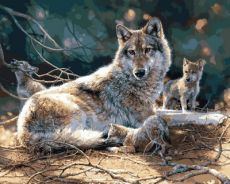 Семья волков - Картина по номерам