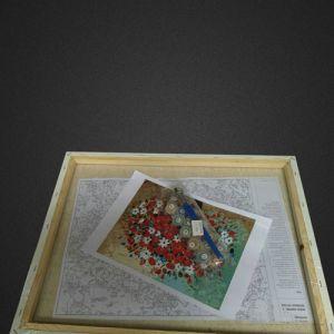 Белые орхидеи (в раме) - Картина-раскраска